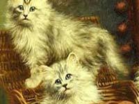 Gioco Gatti Cattivi